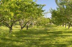 Apple Orchard at the #Markham Museum.