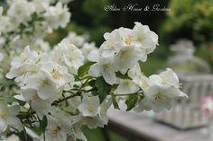 Aiken House & Gardens: Garden Respite