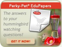 Download our hummingbird EduPaper and learn all about hummingbirds! How To Attract Hummingbirds, Humming Bird Feeders, Backyard Birds, Wild Birds, Planting Flowers, Pets, Animals And Pets