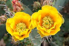 Prickly Yellows 2035 by WolfArtistic.deviantart.com on @DeviantArt