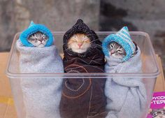 Funny kittens wearing winter dresses The Pet's Planet