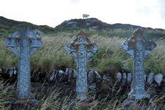holy cow? Kerry, Ireland