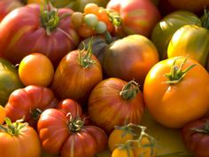 Heirloom varieties of tomatoes are those that people have saved from year to year. They may not be as productive or uniform as hybrids, but they are prized for their outstanding flavor and beauty.