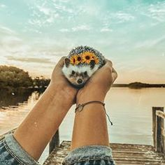 If you're going to San Francisco, be sure to wear some flowers in your hair 🦔🌻🌸🌺 Baby Animals Super Cute, Cute Little Animals, Cute Funny Animals, Hedgehog Pet, Cute Hedgehog, Cute Puppies, Cute Dogs, Tier Fotos, Cute Animal Pictures