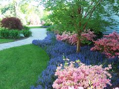 1000 images about dwarf japanese maple on pinterest acer palmatum japanese maple trees and