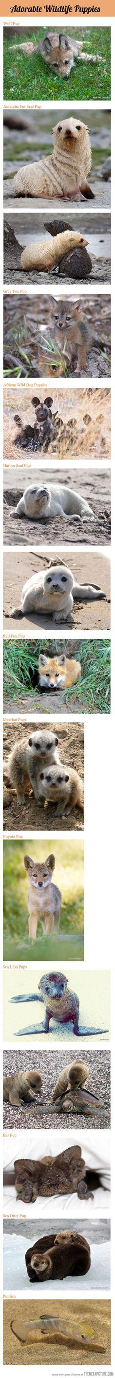 15 Adorable Wildlife Puppies…