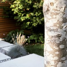 """Sandra on Instagram: """"Un petit coin de nature. L'érable prend sa place dans notre nouveau jardin.  #decosuisse #igerssuisse #suisseblogger #suisseromande🇨🇭…"""" Place, Table Decorations, Nature, Furniture, Instagram, Home Decor, Gardens, Naturaleza, Decoration Home"""