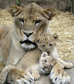 Mommy's love is precious Agreed