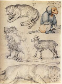 """San Martin Arts Crafts: """"Albrecht Dürer animals""""."""