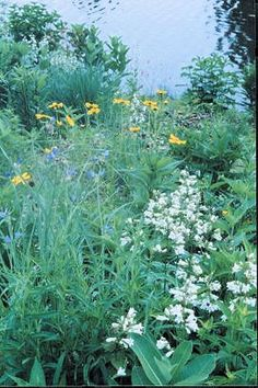 Art and Linda's Wildflowers - natural landscaping, wildflower garden design, installation, consultation and stewardship-- an Illinois based garden that shares the same Michigan native plants.