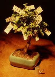 Understanding Cash on Cash return as it relates to real estate investing and how it can help investors choose the right property. Money Trees, Real Estate Investor, Debt Free, Starting A Business, Money Management, Money Saving Tips, Genealogy, The Secret, Coupons
