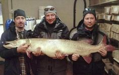 Record Fish: Giant Muskie Caught in Michigan Confirmed as World Record | Field & Stream