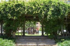 """Richard & Annette Bloch Cancer Survivors Plaza. Looking west thru the vine covered arbor to, """"Cancer There's Hope"""" bronze grouping, Kansas City, MO."""