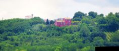 Ancona, Marche, Italy - Trees in the countryside- miniature8 - by Gianni Del Bufalo CC BY-NC-SA by gianni del bufalo