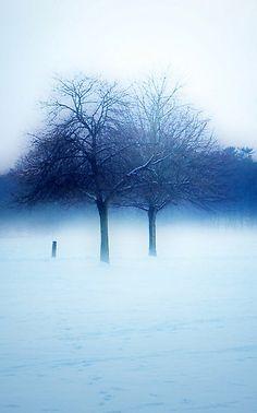 ♀ Silence winter in blue. blue tree