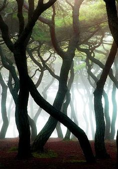 Shrouded, The Enchanted Wood It looks like tree people, dancing Foto Nature, Image Zen, Cool Pictures, Beautiful Pictures, Nature Pictures, Nature Photography, Street Photography, Photography Pics, Wedding Photography