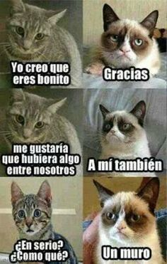 memes en espanol / memes ` memes hilarious can't stop laughing ` memes hilarious ` memes funny ` memes to send to the group chat ` memes divertidos ` memes about relationships ` memes en espanol Funny Grumpy Cat Memes, Funny Animal Jokes, Stupid Funny Memes, Funny Relatable Memes, Funny Animals, Grumpy Kitty, Funny Cats, Cool Memes, Hilarious Sayings