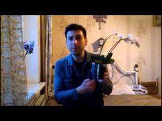 мои Орхидеи - реанимация орхидей с распродажи - уход, полив, пересадка - YouTube