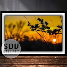 Downloadable image, digital photo, printable wall art, sunset, sunlight, nature, forest, sun, spring, tree, Vienna, Austria Vintage Nature Photography, Nature Photography Flowers, Winter Photography, Flowers Nature, Photography Ideas, Digital Foto, Landscape Photos, Nature Photos, Printable Wall Art