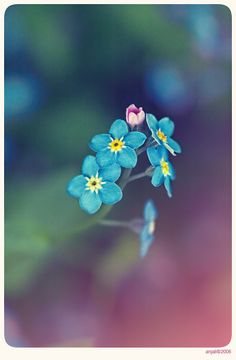 Forget me not - 7 by anjali on deviantART