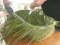 Flax Weaving, Basket Weaving, Leave Art, Maori Patterns, Coconut Leaves, Traditional Baskets, Maori Designs, Pine Needle Baskets, Fibre And Fabric