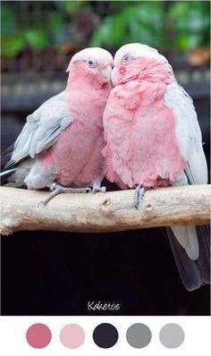 KAKETOE - Mooie kleuren combinatie voor in het interieur roze met grijs.