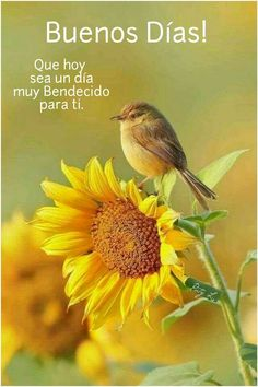 Buenos días ❤️ Morning Greetings Quotes, Morning Messages, Morning Quotes, Good Day, Good Morning, Morning Gif, Hello In Spanish, Birthday Month Flowers, Weekday Quotes