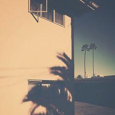 """Palm Trees | Flickr   Photo …"" on Designspiration"
