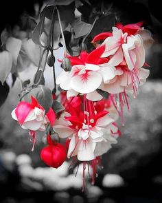 Nature Red and White Flowers