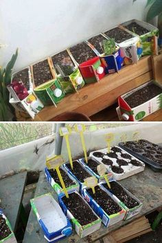 Using cardboard Juice Containers for seed starters Recycling, Reuse Recycle, Container Gardening Vegetables, Vegetable Garden, Vegetable Crafts, Home Crafts, Fun Crafts, Theme Nature, Upcycled Crafts