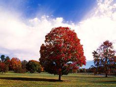 That touch of autumn Beautiful autumn scenery wallpaper [Photo