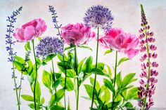 Flower Photography Pink Blue Flower Photo by SoulCenteredPhotoart, $30.00
