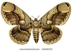 Image result for moth wings
