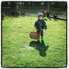 #country #collectingeggs #hens #happykids