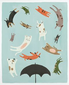 Raining Cats and Dogs from Quill and Fox