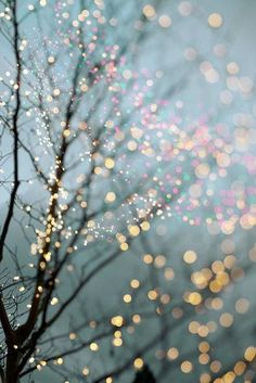 FB cover photos/Wallpaper Winter Photography - Holiday Fairy Lights in Trees, Festive Winter Scene, Fine Art Landscape Photograph, Large Wall Art Tumblr Wallpaper, Screen Wallpaper, Wallpaper Backgrounds, Iphone Wallpapers, Vintage Backgrounds, Iphone Backgrounds, Winter Wallpaper, Christmas Wallpaper, Fairy Lights In Trees