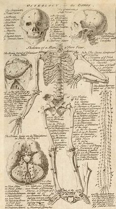 I just discovered this wonderful anatomical chart (see above) from volume one of Ephraim Chambers' Cyclopaedia, published in A . Photo Wall Collage, Collage Art, Wallpapper Iphone, Poster Wall, Poster Prints, Human Anatomy Art, Plakat Design, Anatomy Sketches, Medical Art