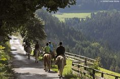 Horse riding in South Tyrol