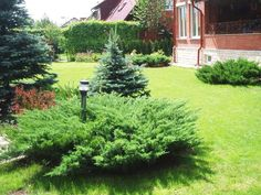 Natural Landscaping Ideas | Small plants and natural fence, backyard landscaping ideas to Feng ...