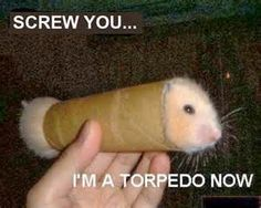 Funny Hamster Pictures with Captions - Bing Images