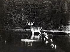 These Were the First Wildlife Photographs Published in National Geographic