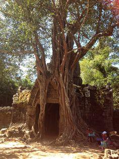Angkor Watt area, Combodia  2014