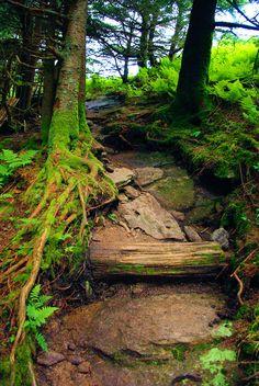 Deep Creek hiking trail on Mt. Mitchell in North Carolina