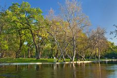 """""""One Mile"""" swimming creek in Bidwell Park, Chico, CA. I lived in Chico for at least 12 years. Got my degree at CSU Chico."""