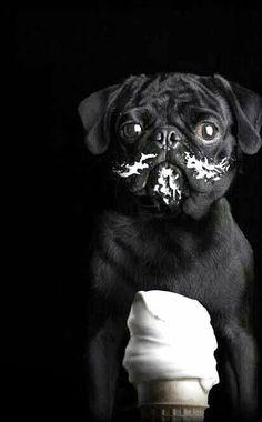 Black pug sweetness PUGLOVE ❤️