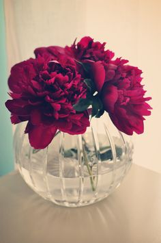 Peonies are my favorite flower!   # Pinterest++ for iPad #