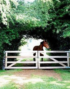 horse at the fence