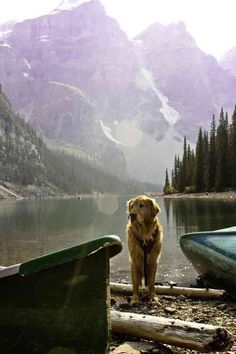I know that lake. In Lake Louise. with a golden retriever. my life is complete. Adventure Is Out There, Adventure Time, Adventure Travel, Nature Adventure, Golden Retrievers, Mundo Animal, Mans Best Friend, The Great Outdoors, Trekking