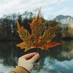 Picc: Autumn Leaf