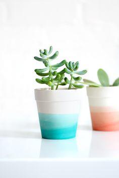 DIY Dye succulent pot
